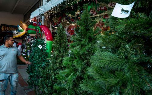 A pesar de la crisis, los venezolanos compran árboles de Navidad por US$100