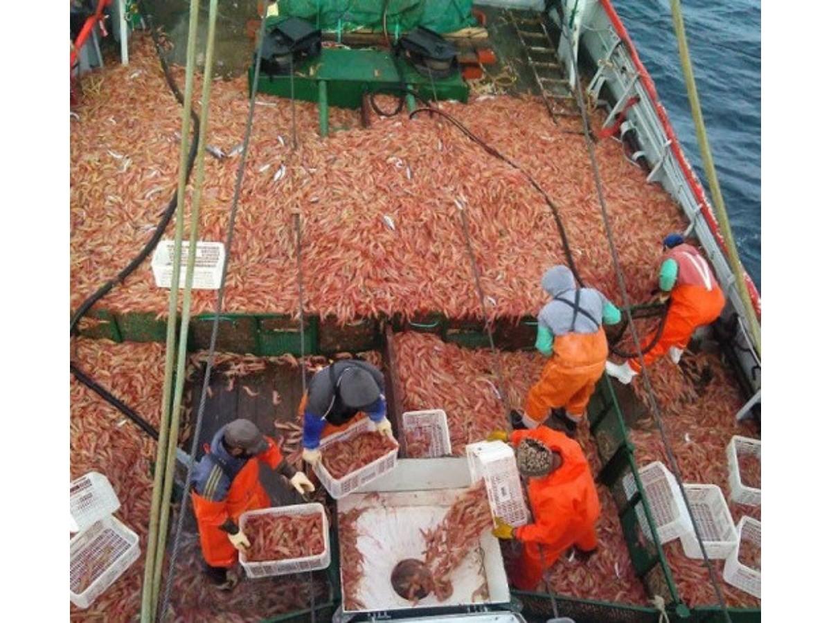 La pesca en Santa Cruz logró superar la pandemia