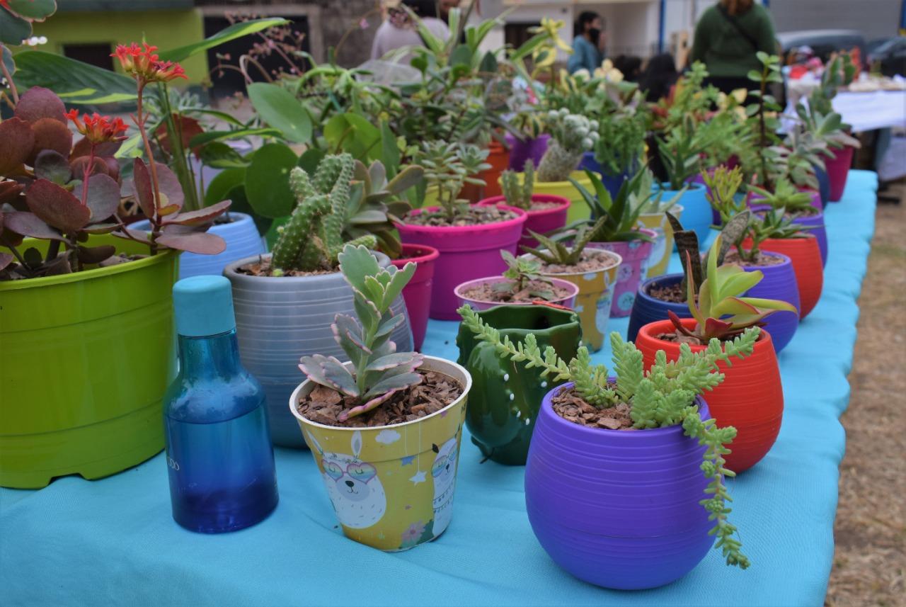 Paseo de Emprendedores Plantas y Flores en Perico.