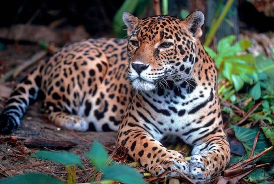 avistan-un-yaguarete-en-la-reserva-natural-de-ledesma