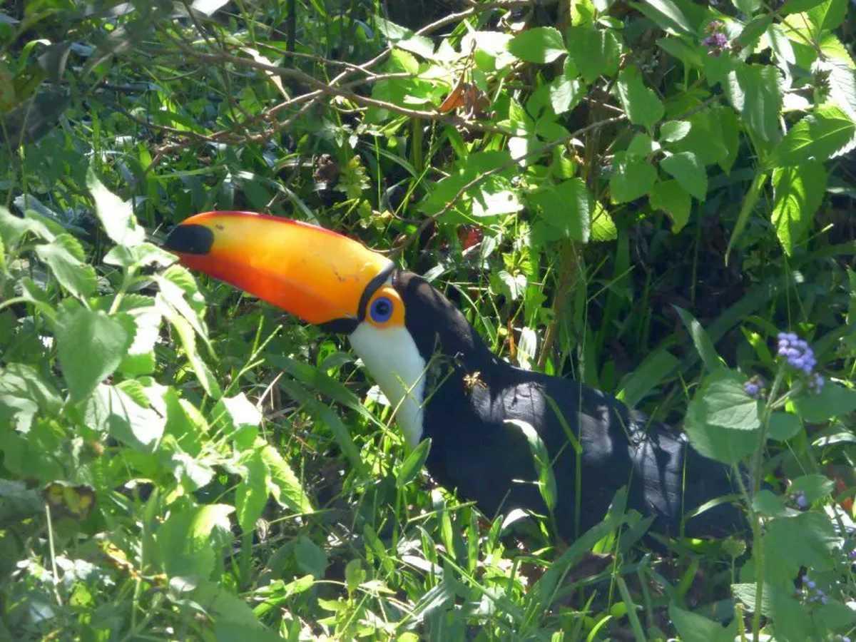 liberacion-de-aves-rescatadas-del-trafico-ilegal