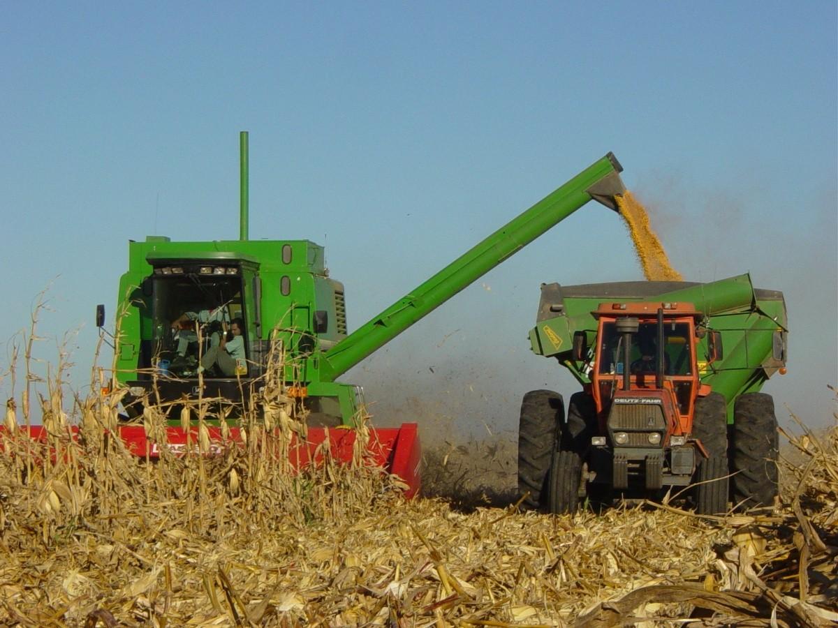 con-precios-record,-los-productores-aceleran-la-venta-de-maiz
