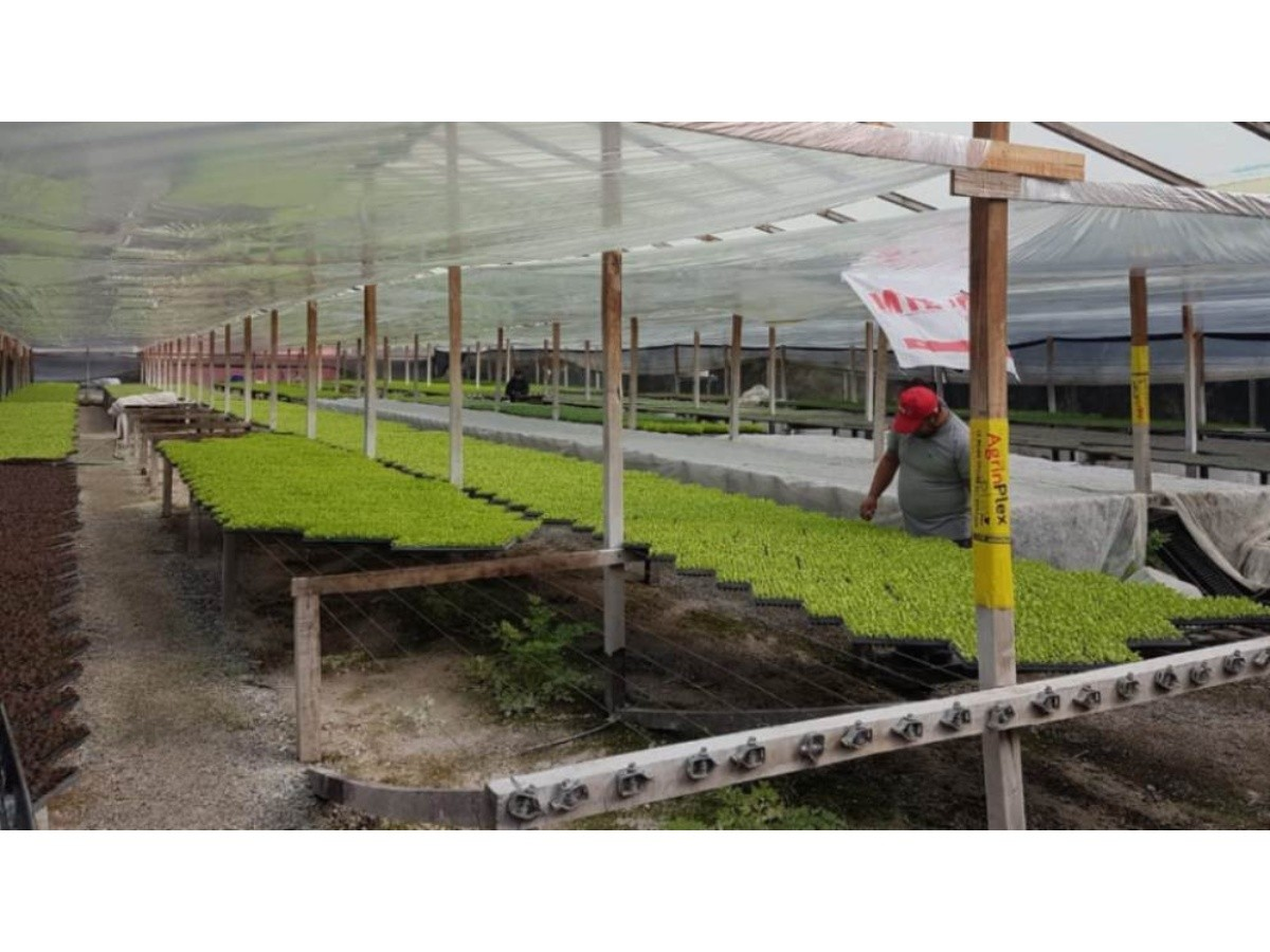 proyectan-ampliar-una-plantinera-horticola-para-abastecer-a-300-familias-de-la- periferia-platense